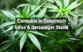 Cannabis Österreich